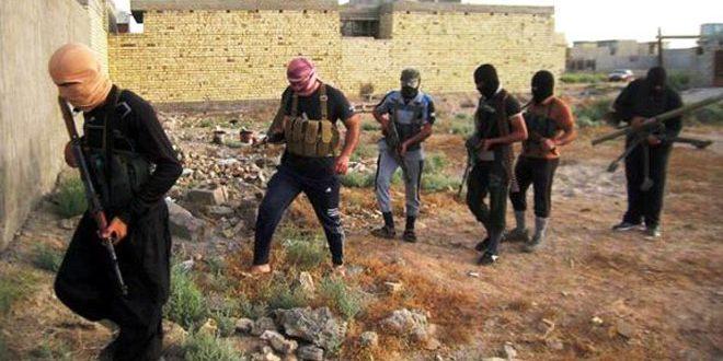 """كريتشا: تنظيم """"داعش"""" الإرهابي أداة أمريكية"""